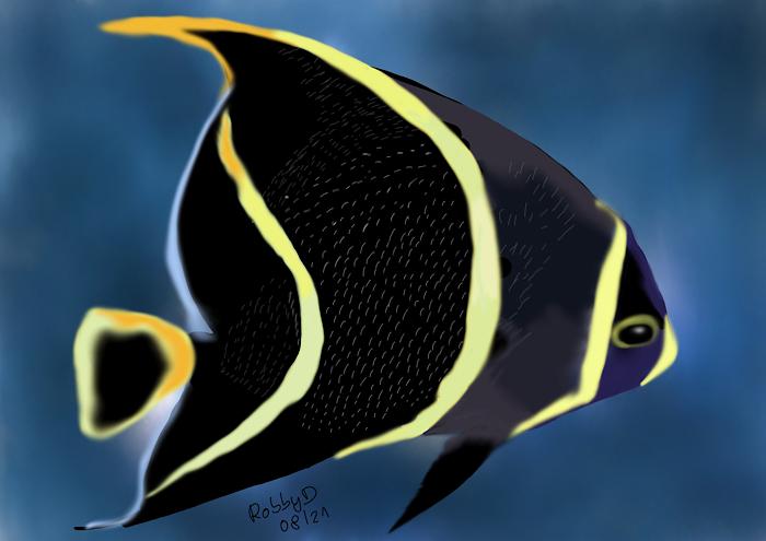 Franzosen Kaiserfisch
